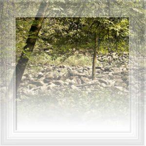 Poesia sul bosco
