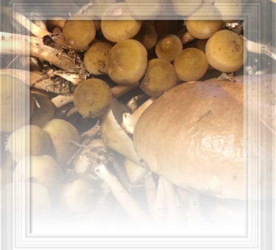 aforisma persone e funghi