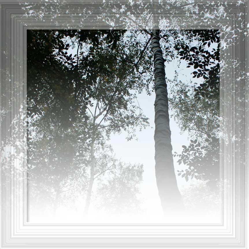 sotto un albero
